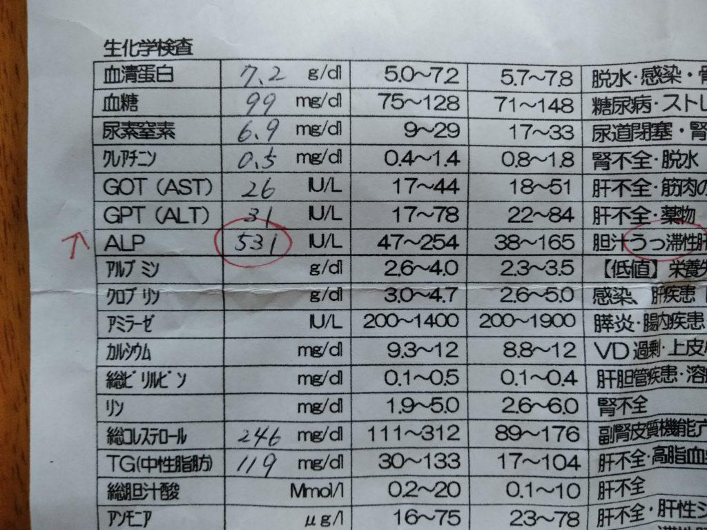 血液検査ALP高い